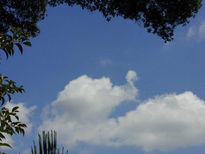 turkey_cloud_by_bodici22